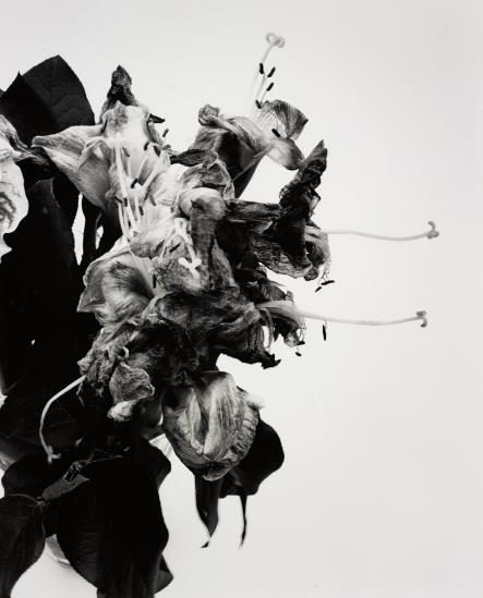 Nobuyoshi Araki-From Close To Range-1991