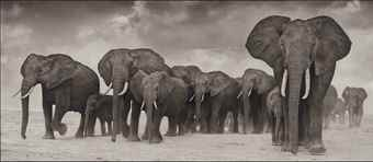 Nick Brandt-Elephants on the Move-2006