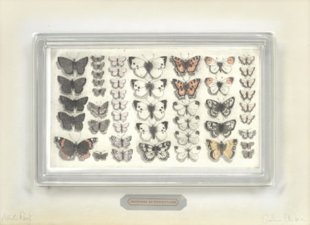 British Butterflies-