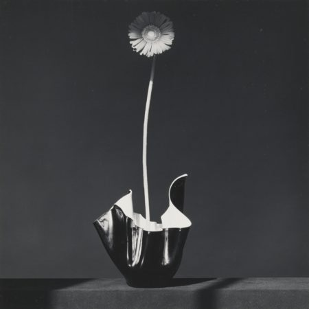Robert Mapplethorpe-African Daisy-1982