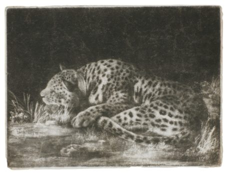 George Stubbs-A Sleeping Cheetah (Taylor 8)-1788