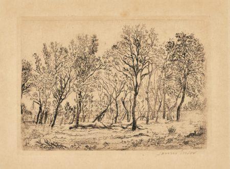 James Ensor-Acacia; Bouquet D'Arbres; Sentier À Groenendael; AndSous-Bois À Groenendael(D. T. E. 24 41 48 63)-1888
