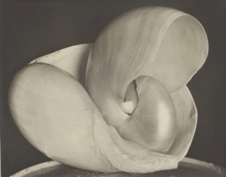 Edward Weston-Shells, 6S-1927