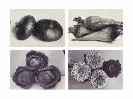 Charles Jones-Various garden images-1900