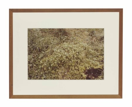 Ana Mendieta-Untitled, from Silueta Series, Iowa-1979