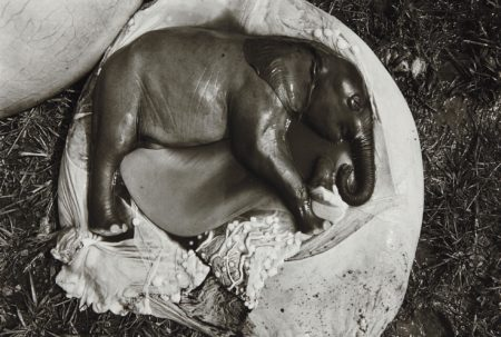 Peter Beard-Elephant Embryo, Uganda-1966