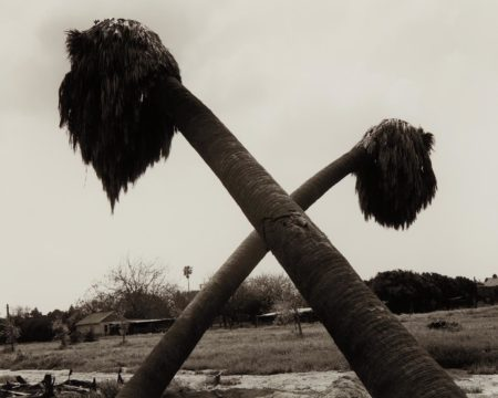 Dead Palms, Partially Uprooted, Ontario, California-1983