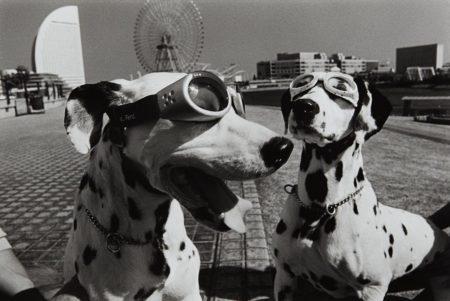 Elliott Erwitt-Yokohama, Japan-2003