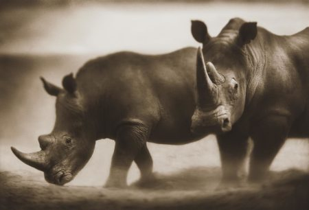 Nick Brandt-Two Rhinos, Lewa-2003