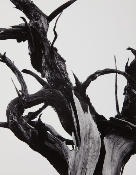 Ansel Adams-Dead Tree, Sunset Crater National Monument, Arizona-1947