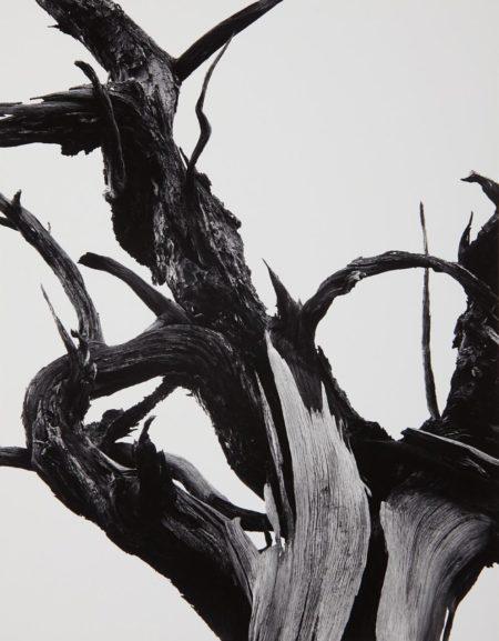 Ansel Adams-Dead Tree, Sunset Crater National Monument, Arizona-1947