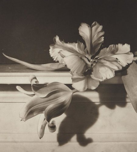 Horst P. Horst-Tulips, Oyster Bay, New York-1989
