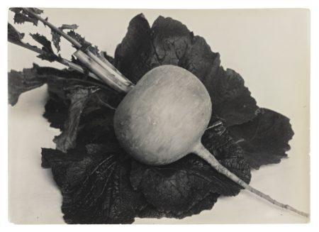 Charles Jones-Turnip Green Top-1900