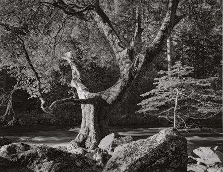 Ansel Adams-Morning, Merced River Canyon, Yosemite National Park-1950
