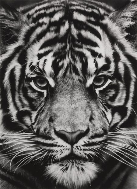 Robert Longo-Untitled (Tiger)-2012