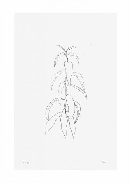 Ellsworth Kelly-Peach Branch, from Leaves-1974
