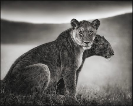Nick Brandt-Sitting Lionesses' Serengeti-2002
