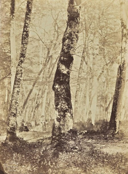 Constant Alexandre Famin-En foret de Fontainebleau-1874