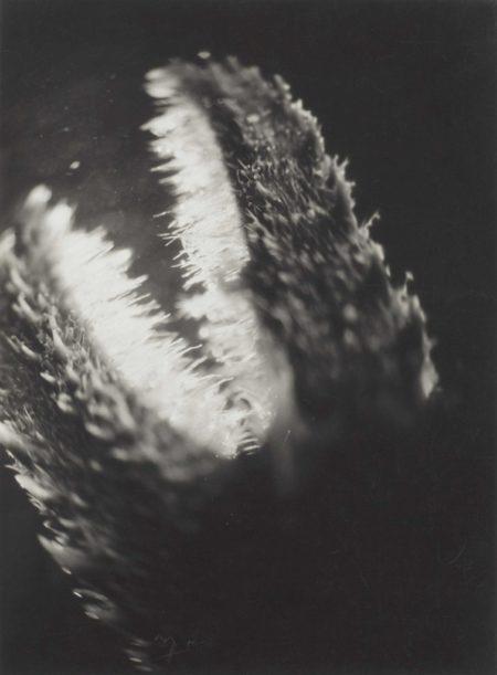 Jean Painleve-Pince de Galathee-1928