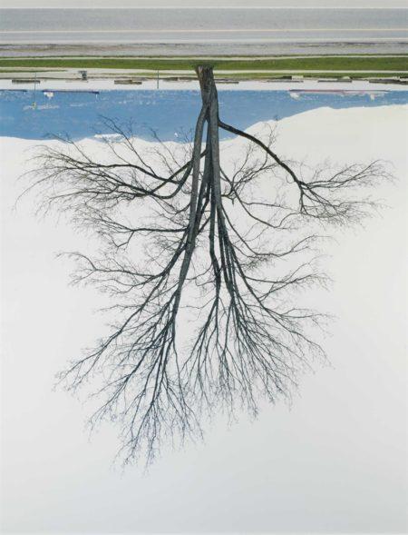 Rodney Graham-Locarno Beach Tree, Winter-2007