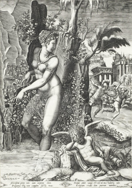 After Giorgio Mantovano Ghisi - Venus and the Rose (Boorsch 22)-1564
