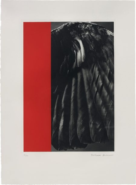 Balthasar Burkhard - Crow-Wing and Monochrome-1988