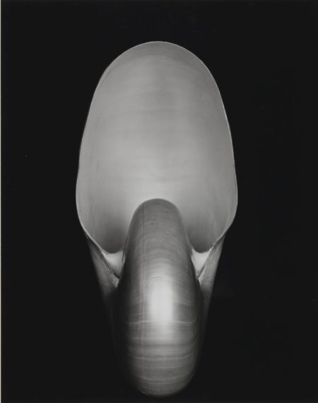 Edward Weston-Shell (Nautilus)-1927