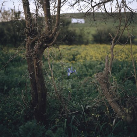 Yto Barrada-Iris et Ronces (Iris Tingitana)-2007