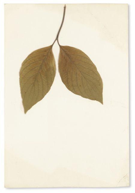 Joseph Beuys-Untitled-1982