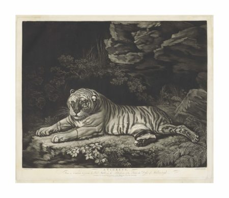 After John Dixon - A Tigress lying on the ground-1780