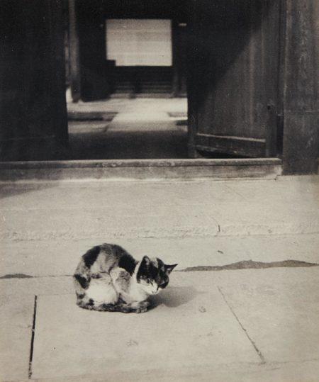 Cat-1930