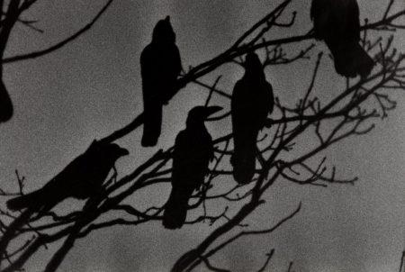 Masahisa Fukase-Nayoro from Ravens-1976