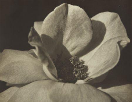 Johan Hagemeyer-Flower Form-1928