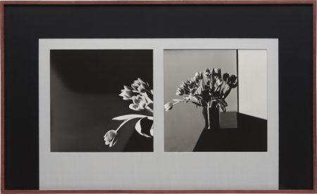 Robert Mapplethorpe-Tulips-1977