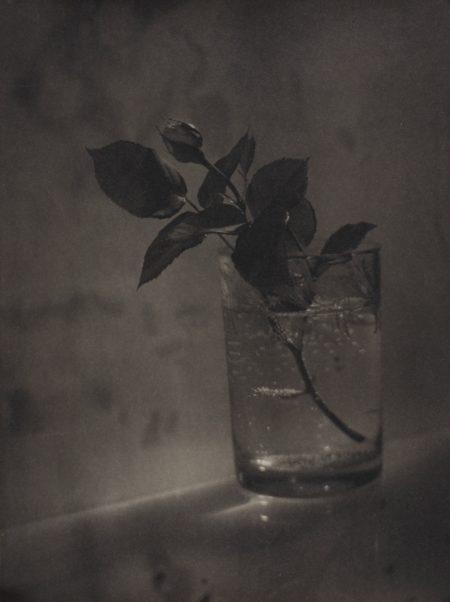 Josef Sudek-White Rosebud-1950