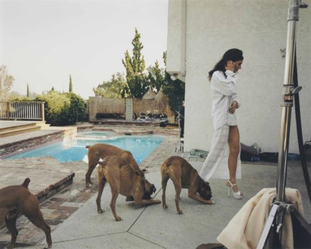 Larry Sultan-Boxer Dogs, Mission Hills, From The Valley-1999