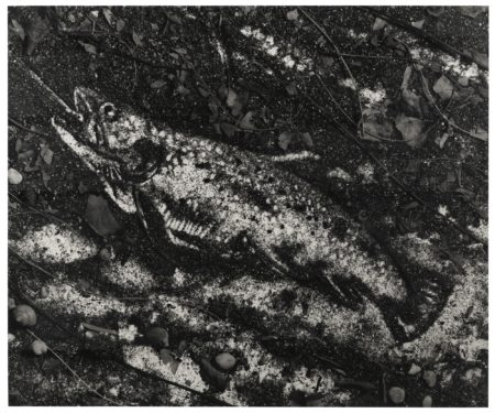 Vik Muniz-The Trout (After Courbet)-1998
