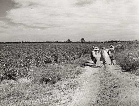 Marion Post Wolcott - Untitled (Three Girls Carrying Cotton Sacks, Possibly Mileston Plantation)-1940