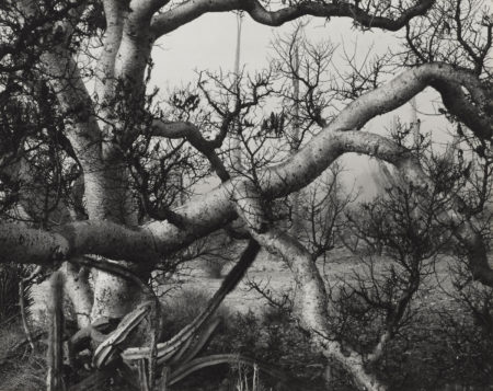 Brett Weston-Untitled (Trees And Branches)-1969