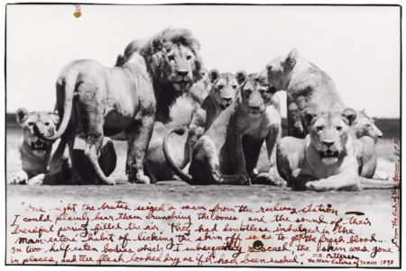 Lion Pride, From The End Of The Game-1976