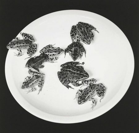 Robert Mapplethorpe-Frogs, 1984-1984