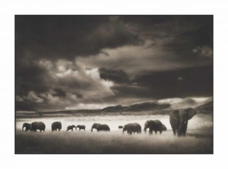 Elephant Herd, Serengeti, 2001-2001