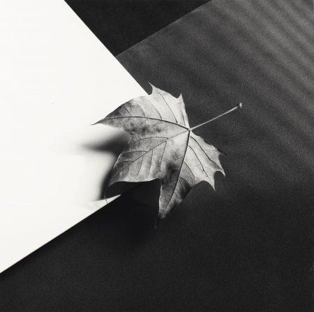 Leaf, 1986-1986