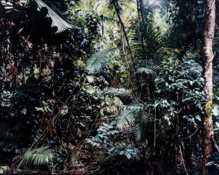 Paradise 6, Daintree/Australien-1998