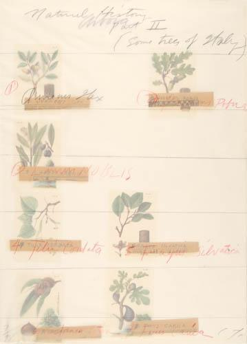 Cy Twombly-Natural History, Part II-1976