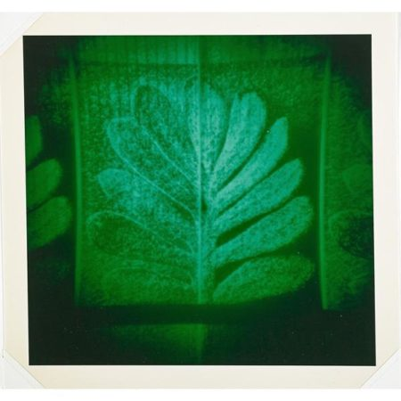 Thomas Ruff-After Blossfeldt-1994