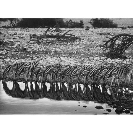Sebastiao Salgado-Zebras, Namibia-2005