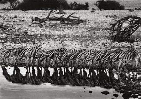 Sebastiao Salgado-Mountain Zebra, Hoanib River Valley, Damaraland, Namibia-2005