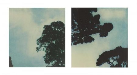 Cy Twombly-Trees (No. 1 & No. 3)-1986