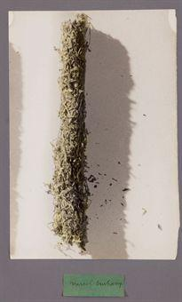 Marcel Duchamp-Couverture-Cigarette (Stripped-Down Cigarette Tobacco)-1936